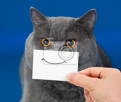 Постер Кошки Забавный Кот портрет с улыбкой на картуКошки<br>Постер на холсте или бумаге. Любого нужного вам размера. В раме или без. Подвес в комплекте. Трехслойная надежная упаковка. Доставим в любую точку России. Вам осталось только повесить картину на стену!<br>