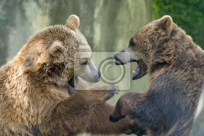 Постер Животные Два черных медведей гризли во время тушения, 30x20 см, на бумагеМедведи<br>Постер на холсте или бумаге. Любого нужного вам размера. В раме или без. Подвес в комплекте. Трехслойная надежная упаковка. Доставим в любую точку России. Вам осталось только повесить картину на стену!<br>