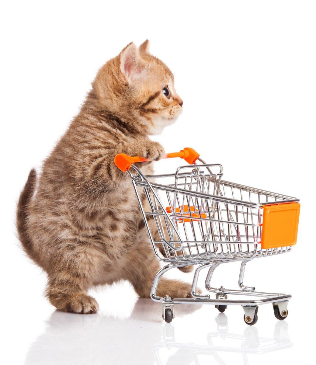 Британская кошка с корзиной на белом. котенок osolate, 20x23 см, на бумагеКошки<br>Постер на холсте или бумаге. Любого нужного вам размера. В раме или без. Подвес в комплекте. Трехслойная надежная упаковка. Доставим в любую точку России. Вам осталось только повесить картину на стену!<br>