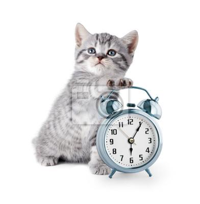 Постер Животные Прелестный котенок с будильником, 20x20 см, на бумагеКошки<br>Постер на холсте или бумаге. Любого нужного вам размера. В раме или без. Подвес в комплекте. Трехслойная надежная упаковка. Доставим в любую точку России. Вам осталось только повесить картину на стену!<br>