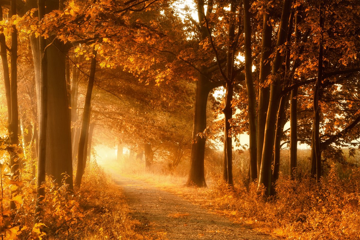 Постер Осень Wanderweg в goldener Herbstsonne und NebelОсень<br>Постер на холсте или бумаге. Любого нужного вам размера. В раме или без. Подвес в комплекте. Трехслойная надежная упаковка. Доставим в любую точку России. Вам осталось только повесить картину на стену!<br>
