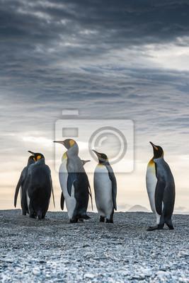 Гордый король пингвинов в отеле St. Andrews Bay, Южная Джорджия, 20x30 см, на бумагеПингвины<br>Постер на холсте или бумаге. Любого нужного вам размера. В раме или без. Подвес в комплекте. Трехслойная надежная упаковка. Доставим в любую точку России. Вам осталось только повесить картину на стену!<br>