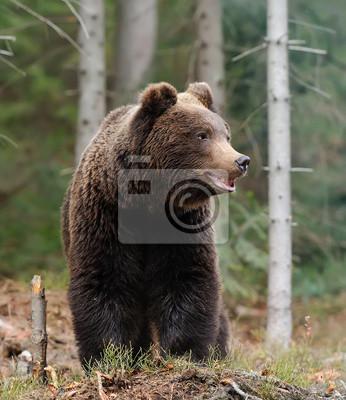 Постер Животные Постер 57833811, 20x23 см, на бумагеМедведи<br>Постер на холсте или бумаге. Любого нужного вам размера. В раме или без. Подвес в комплекте. Трехслойная надежная упаковка. Доставим в любую точку России. Вам осталось только повесить картину на стену!<br>