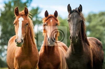 Постер Лошади Группа из трех молодых лошадей на пастбищеЛошади<br>Постер на холсте или бумаге. Любого нужного вам размера. В раме или без. Подвес в комплекте. Трехслойная надежная упаковка. Доставим в любую точку России. Вам осталось только повесить картину на стену!<br>