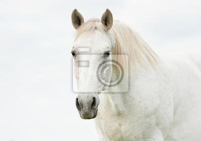Портрет красивой белой лошади, 28x20 см, на бумагеЛошади<br>Постер на холсте или бумаге. Любого нужного вам размера. В раме или без. Подвес в комплекте. Трехслойная надежная упаковка. Доставим в любую точку России. Вам осталось только повесить картину на стену!<br>