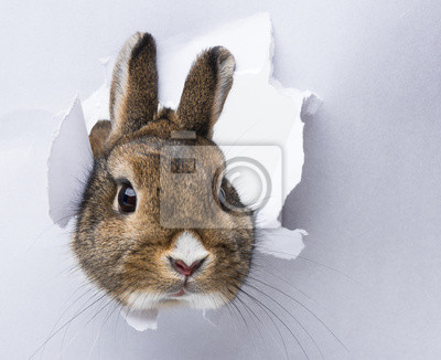 Постер Животные Маленький кролик смотрит сквозь дыру в бумаге, 25x20 см, на бумагеКролики<br>Постер на холсте или бумаге. Любого нужного вам размера. В раме или без. Подвес в комплекте. Трехслойная надежная упаковка. Доставим в любую точку России. Вам осталось только повесить картину на стену!<br>