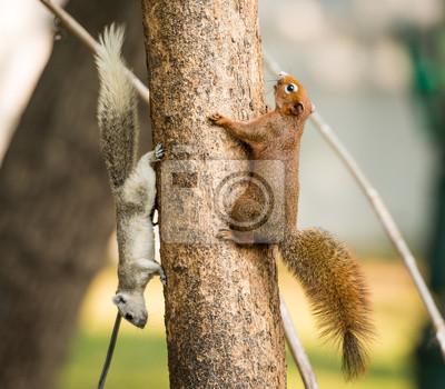 Постер Животные Белка или небольшой Гонг, Мелких млекопитающих на дереве, 23x20 см, на бумагеБелки<br>Постер на холсте или бумаге. Любого нужного вам размера. В раме или без. Подвес в комплекте. Трехслойная надежная упаковка. Доставим в любую точку России. Вам осталось только повесить картину на стену!<br>