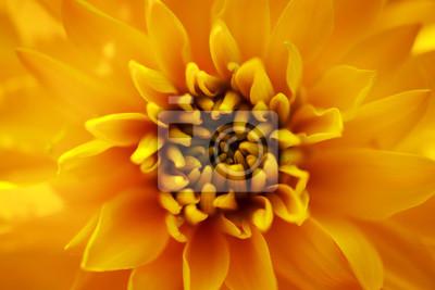 Постер Рудбекии Желтый цветок рудбекииРудбекии<br>Постер на холсте или бумаге. Любого нужного вам размера. В раме или без. Подвес в комплекте. Трехслойная надежная упаковка. Доставим в любую точку России. Вам осталось только повесить картину на стену!<br>
