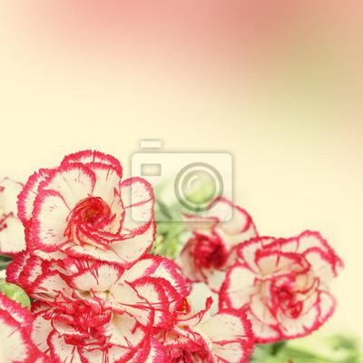 """Постер Гвоздики """"Гвоздики цветы"""" от Artwall"""