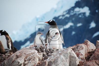 Семья пингвинов , 30x20 см, на бумагеПингвины<br>Постер на холсте или бумаге. Любого нужного вам размера. В раме или без. Подвес в комплекте. Трехслойная надежная упаковка. Доставим в любую точку России. Вам осталось только повесить картину на стену!<br>