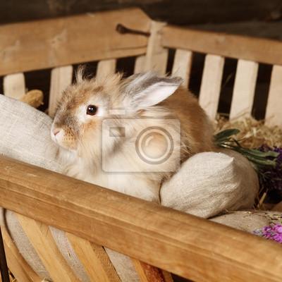 Светло-красный Пасхальный кролик сидит в вагоне, полные сена, 20x20 см, на бумагеКролики<br>Постер на холсте или бумаге. Любого нужного вам размера. В раме или без. Подвес в комплекте. Трехслойная надежная упаковка. Доставим в любую точку России. Вам осталось только повесить картину на стену!<br>