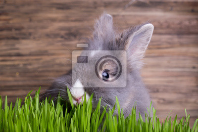 Постер Животные Кролики im-гра, 30x20 см, на бумагеЗайцы<br>Постер на холсте или бумаге. Любого нужного вам размера. В раме или без. Подвес в комплекте. Трехслойная надежная упаковка. Доставим в любую точку России. Вам осталось только повесить картину на стену!<br>