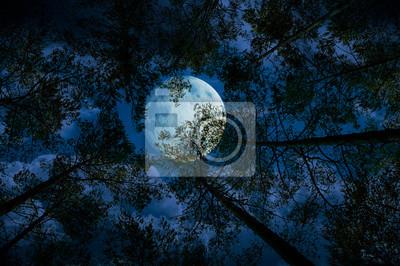 Постер Полнолуние Луна ночью в лесуПолнолуние<br>Постер на холсте или бумаге. Любого нужного вам размера. В раме или без. Подвес в комплекте. Трехслойная надежная упаковка. Доставим в любую точку России. Вам осталось только повесить картину на стену!<br>
