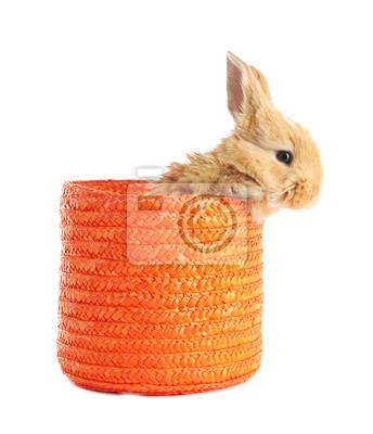 Постер Зайцы Пушистые хитрый кролик в плетеной корзине на беломЗайцы<br>Постер на холсте или бумаге. Любого нужного вам размера. В раме или без. Подвес в комплекте. Трехслойная надежная упаковка. Доставим в любую точку России. Вам осталось только повесить картину на стену!<br>