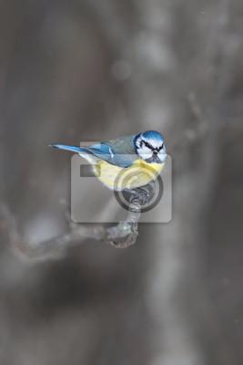 Постер Птицы Постер 60617942, 20x30 см, на бумагеСиницы<br>Постер на холсте или бумаге. Любого нужного вам размера. В раме или без. Подвес в комплекте. Трехслойная надежная упаковка. Доставим в любую точку России. Вам осталось только повесить картину на стену!<br>
