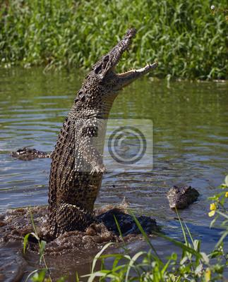 Постер Рептилии Нападение крокодилаРептилии<br>Постер на холсте или бумаге. Любого нужного вам размера. В раме или без. Подвес в комплекте. Трехслойная надежная упаковка. Доставим в любую точку России. Вам осталось только повесить картину на стену!<br>