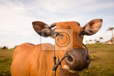 Постер Коровы Симпатичные корова крупным планомКоровы<br>Постер на холсте или бумаге. Любого нужного вам размера. В раме или без. Подвес в комплекте. Трехслойная надежная упаковка. Доставим в любую точку России. Вам осталось только повесить картину на стену!<br>