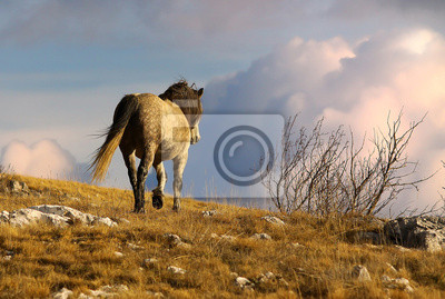 Постер Лошади Дикая лошадь прогулок в горахЛошади<br>Постер на холсте или бумаге. Любого нужного вам размера. В раме или без. Подвес в комплекте. Трехслойная надежная упаковка. Доставим в любую точку России. Вам осталось только повесить картину на стену!<br>