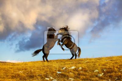 Борьба двух диких лошадей на вершине холма, 30x20 см, на бумагеЛошади<br>Постер на холсте или бумаге. Любого нужного вам размера. В раме или без. Подвес в комплекте. Трехслойная надежная упаковка. Доставим в любую точку России. Вам осталось только повесить картину на стену!<br>