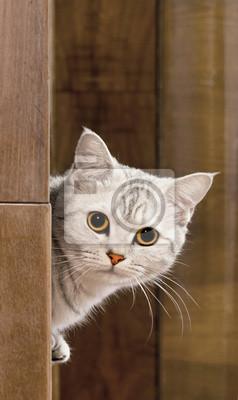 Домашняя кошка, 20x34 см, на бумагеКошки<br>Постер на холсте или бумаге. Любого нужного вам размера. В раме или без. Подвес в комплекте. Трехслойная надежная упаковка. Доставим в любую точку России. Вам осталось только повесить картину на стену!<br>