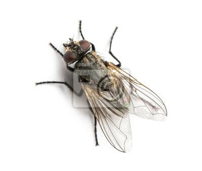 Постер-картина Мухи Грязные обычной домашней мухи смотреть с высока, бытовой городского аэропМухи<br>Постер на холсте или бумаге. Любого нужного вам размера. В раме или без. Подвес в комплекте. Трехслойная надежная упаковка. Доставим в любую точку России. Вам осталось только повесить картину на стену!<br>
