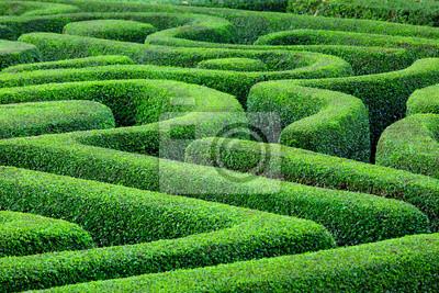Постер-картина Лабиринт Зеленое растение лабиринтЛабиринт<br>Постер на холсте или бумаге. Любого нужного вам размера. В раме или без. Подвес в комплекте. Трехслойная надежная упаковка. Доставим в любую точку России. Вам осталось только повесить картину на стену!<br>