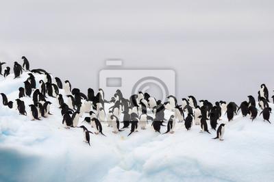 Постер Пингвины Взрослые пингвины Адели, сгруппированных на айсбергПингвины<br>Постер на холсте или бумаге. Любого нужного вам размера. В раме или без. Подвес в комплекте. Трехслойная надежная упаковка. Доставим в любую точку России. Вам осталось только повесить картину на стену!<br>