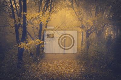 Постер Туман Таинственный туманный лес с сказочный видТуман<br>Постер на холсте или бумаге. Любого нужного вам размера. В раме или без. Подвес в комплекте. Трехслойная надежная упаковка. Доставим в любую точку России. Вам осталось только повесить картину на стену!<br>