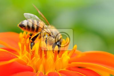 Постер Пчелы