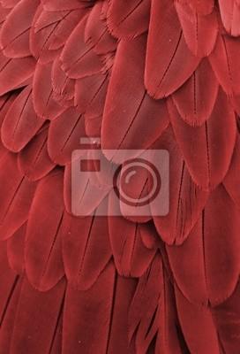 Постер Птицы Постер 64735183, 20x29 см, на бумагеПерья птиц<br>Постер на холсте или бумаге. Любого нужного вам размера. В раме или без. Подвес в комплекте. Трехслойная надежная упаковка. Доставим в любую точку России. Вам осталось только повесить картину на стену!<br>