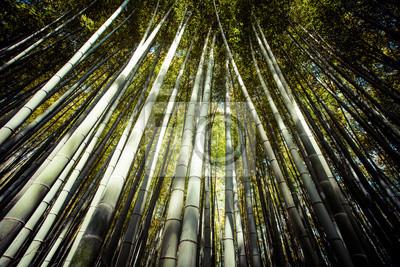 Постер Arashiyama горы Киото Япония с бамбуковом лесуБамбук<br>Постер на холсте или бумаге. Любого нужного вам размера. В раме или без. Подвес в комплекте. Трехслойная надежная упаковка. Доставим в любую точку России. Вам осталось только повесить картину на стену!<br>