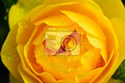 Постер Розы Желтая роза макроРозы<br>Постер на холсте или бумаге. Любого нужного вам размера. В раме или без. Подвес в комплекте. Трехслойная надежная упаковка. Доставим в любую точку России. Вам осталось только повесить картину на стену!<br>