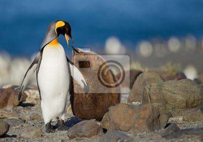Постер Пингвины