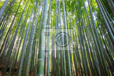 Бамбуковый лес, Киото, Япония, 30x20 см, на бумагеБамбук<br>Постер на холсте или бумаге. Любого нужного вам размера. В раме или без. Подвес в комплекте. Трехслойная надежная упаковка. Доставим в любую точку России. Вам осталось только повесить картину на стену!<br>