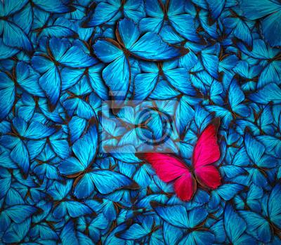 Постер-картина Бабочки Красивая бабочка фонаБабочки<br>Постер на холсте или бумаге. Любого нужного вам размера. В раме или без. Подвес в комплекте. Трехслойная надежная упаковка. Доставим в любую точку России. Вам осталось только повесить картину на стену!<br>