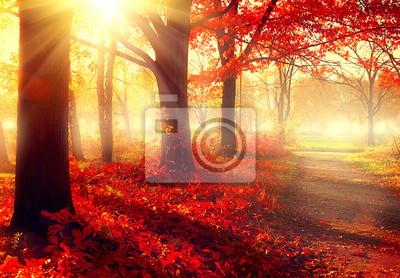Постер Рассвет Осень сцена. Красивый осенний парк в солнечный светРассвет<br>Постер на холсте или бумаге. Любого нужного вам размера. В раме или без. Подвес в комплекте. Трехслойная надежная упаковка. Доставим в любую точку России. Вам осталось только повесить картину на стену!<br>