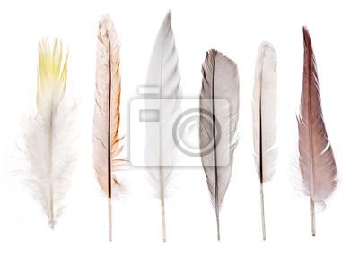 Постер Птицы Постер 69757779, 28x20 см, на бумагеПерья птиц<br>Постер на холсте или бумаге. Любого нужного вам размера. В раме или без. Подвес в комплекте. Трехслойная надежная упаковка. Доставим в любую точку России. Вам осталось только повесить картину на стену!<br>