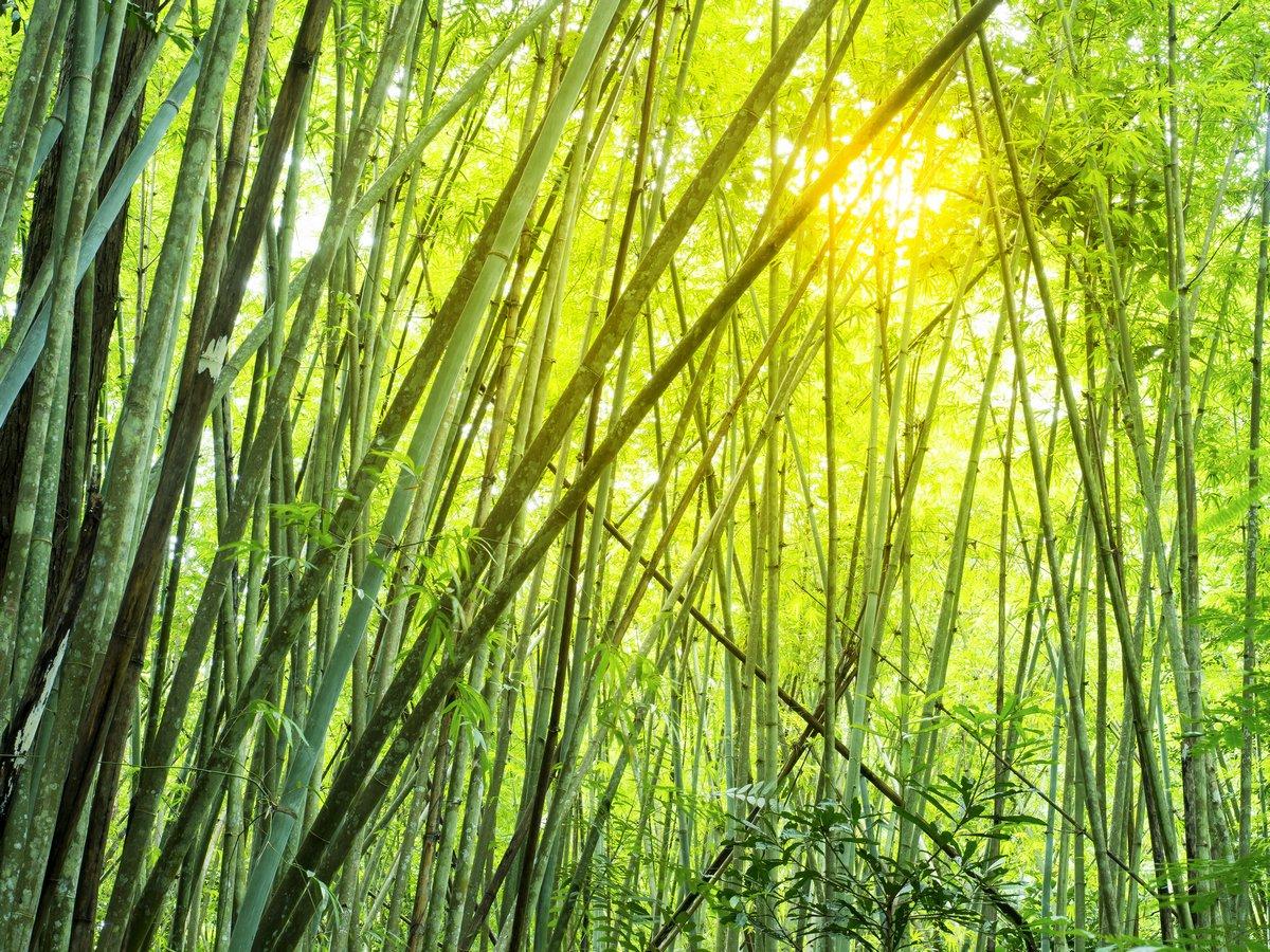 Постер Бамбуковый лес в тропическихБамбук<br>Постер на холсте или бумаге. Любого нужного вам размера. В раме или без. Подвес в комплекте. Трехслойная надежная упаковка. Доставим в любую точку России. Вам осталось только повесить картину на стену!<br>