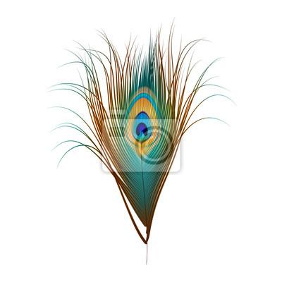Постер Павлины - перо павлина