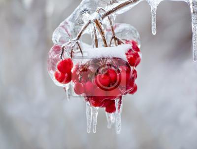 Постер Рябина Крупным планом замороженных красных ягод на деревеРябина<br>Постер на холсте или бумаге. Любого нужного вам размера. В раме или без. Подвес в комплекте. Трехслойная надежная упаковка. Доставим в любую точку России. Вам осталось только повесить картину на стену!<br>
