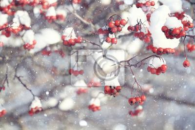 Постер Рябина Красные ягоды под снегом, снег, фон, рябины, боярышникаРябина<br>Постер на холсте или бумаге. Любого нужного вам размера. В раме или без. Подвес в комплекте. Трехслойная надежная упаковка. Доставим в любую точку России. Вам осталось только повесить картину на стену!<br>