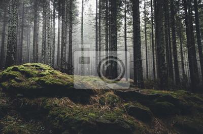 Постер Туман Пустыне пейзаж леса с соснами и мхом на камняхТуман<br>Постер на холсте или бумаге. Любого нужного вам размера. В раме или без. Подвес в комплекте. Трехслойная надежная упаковка. Доставим в любую точку России. Вам осталось только повесить картину на стену!<br>