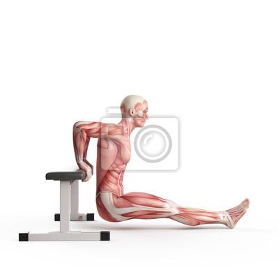 Постер Упражнения