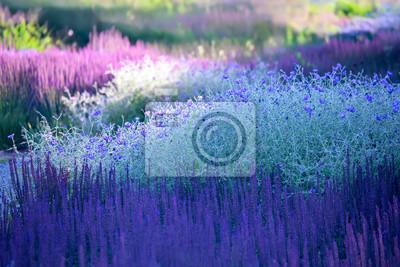 Постер Люпины Цветущие растения - ландшафтный дизайнЛюпины<br>Постер на холсте или бумаге. Любого нужного вам размера. В раме или без. Подвес в комплекте. Трехслойная надежная упаковка. Доставим в любую точку России. Вам осталось только повесить картину на стену!<br>