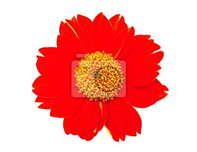Постер Разные цветы Крупным планом оранжевый цветок, изолированных на белом фоне.Разные цветы<br>Постер на холсте или бумаге. Любого нужного вам размера. В раме или без. Подвес в комплекте. Трехслойная надежная упаковка. Доставим в любую точку России. Вам осталось только повесить картину на стену!<br>