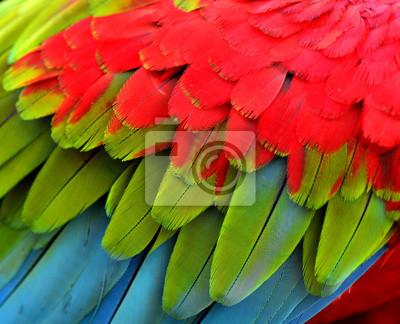 Постер Перья птиц