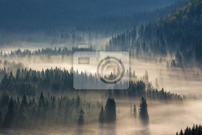 Постер Туман Пихтовые деревья на лугу вниз будет хвойный лес в туманной горыТуман<br>Постер на холсте или бумаге. Любого нужного вам размера. В раме или без. Подвес в комплекте. Трехслойная надежная упаковка. Доставим в любую точку России. Вам осталось только повесить картину на стену!<br>