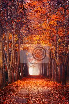 Постер Вечер Осенний туманный лесВечер<br>Постер на холсте или бумаге. Любого нужного вам размера. В раме или без. Подвес в комплекте. Трехслойная надежная упаковка. Доставим в любую точку России. Вам осталось только повесить картину на стену!<br>