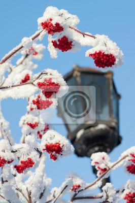 Постер Рябина Дерево рябины, покрытые снегом на фоне неба с лампойРябина<br>Постер на холсте или бумаге. Любого нужного вам размера. В раме или без. Подвес в комплекте. Трехслойная надежная упаковка. Доставим в любую точку России. Вам осталось только повесить картину на стену!<br>