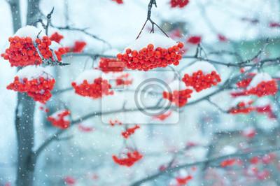 Постер Рябина Пейзаж со снегом гроздья ярко-красной рябиныРябина<br>Постер на холсте или бумаге. Любого нужного вам размера. В раме или без. Подвес в комплекте. Трехслойная надежная упаковка. Доставим в любую точку России. Вам осталось только повесить картину на стену!<br>